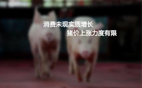视说猪讯第七期