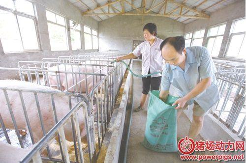 走近养猪人第六期:他们是养猪人,但也是夫妻……