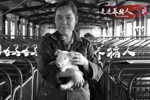 走近养猪人十二期:我妈妈是个养猪人,她抱猪比抱我还多…