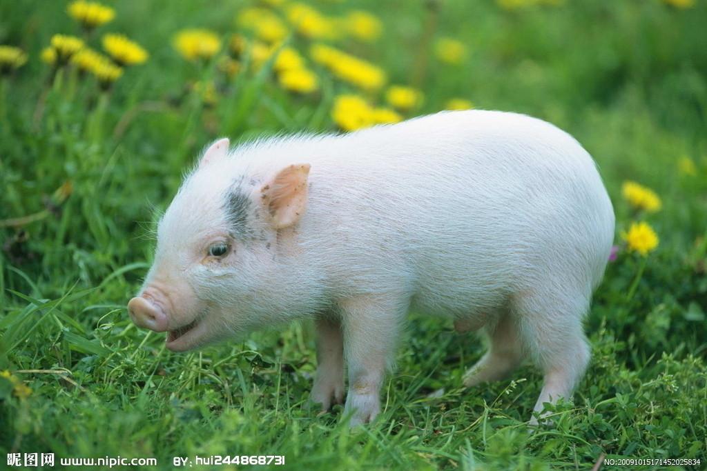 不小心把猪饲料当成零食发给同事,结果他们吃的很香