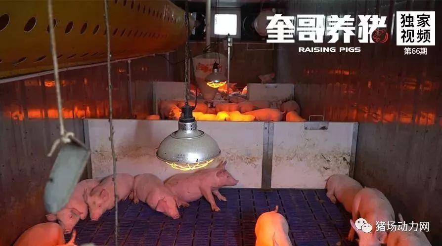 奎哥养猪66期:5万块建的集装箱猪舍,好处竟然这么多!
