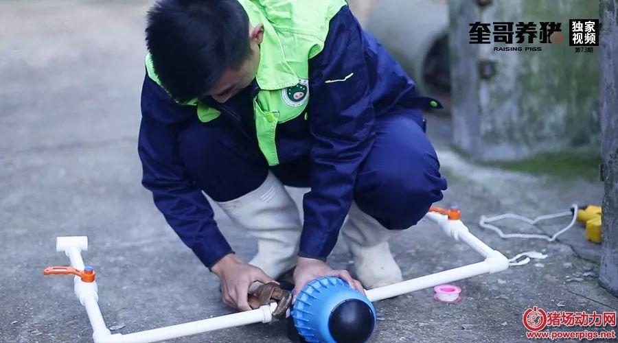奎哥养猪73期:一个小工具竟能大大提高工作效率,让猪群饮水加药不再愁!