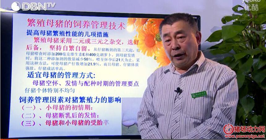 王雍:种母猪的科学饲养