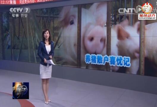 养猪散户喜忧记