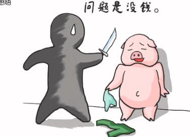 一头猪的另类生活