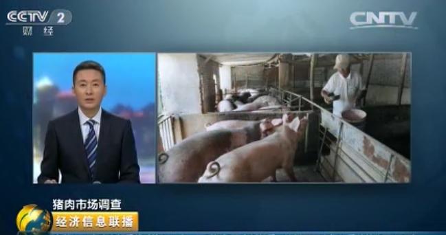 生猪利润超500元,养殖户为何不敢补栏?