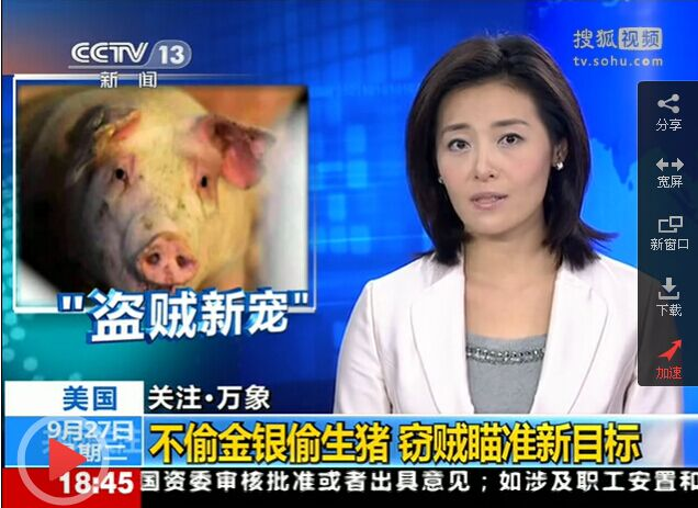 美国窃贼 不偷金银偷生猪 瞄准新目标