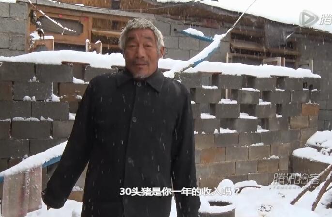 暴雪压塌养猪场,养殖户无力施救,欲哭无泪