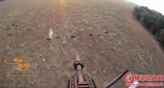美国德州野猪成灾,农场主雇人驾驶直升机射杀野猪,太刺激了!