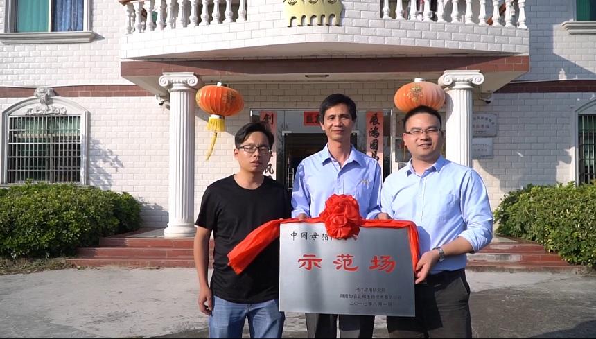 猪场动力网走访中国母猪PSY示范场—河源兴泰种猪有限公司