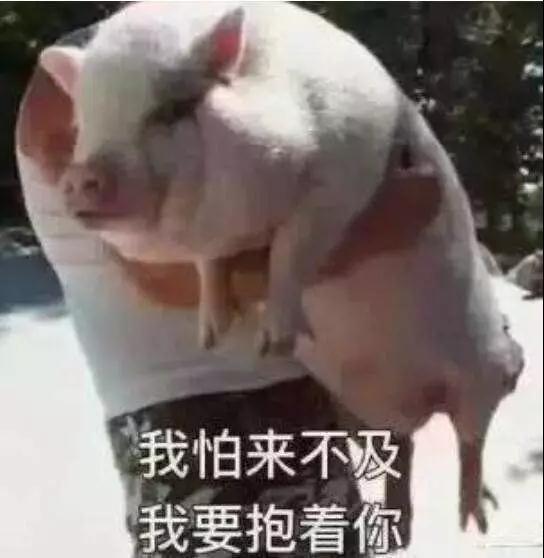 【问答】肥猪咳嗽?母猪排毒?仔猪假死?你想问的都在这里