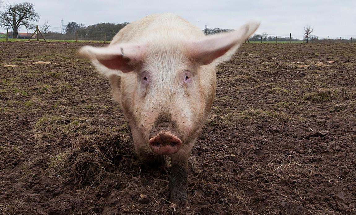 大成食品携3家知名企业进军畜牧环保业