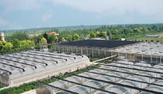 罗牛山:预计10万头猪场项目年内完工