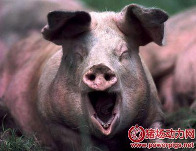 数据:供给决定猪价,未来还会大涨?