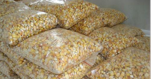 玉米价格跌跌不休是谁惹的祸 政策还是供需