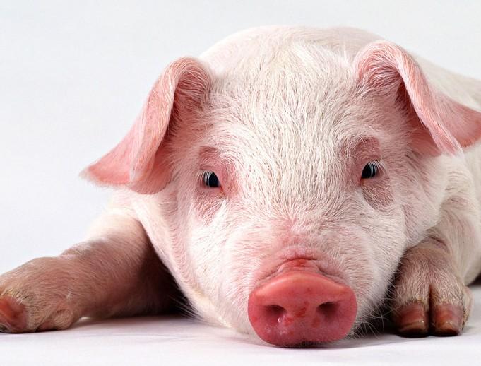 10月猪价:更多的是9月行情的延续