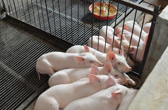 第41周 生猪市场供应较为稳定