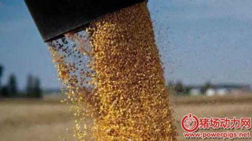 中国玉米、小麦、稻谷库存均居世界之首