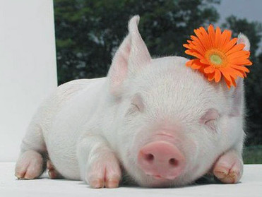 浅谈防治断奶仔猪腹泻的营养措施
