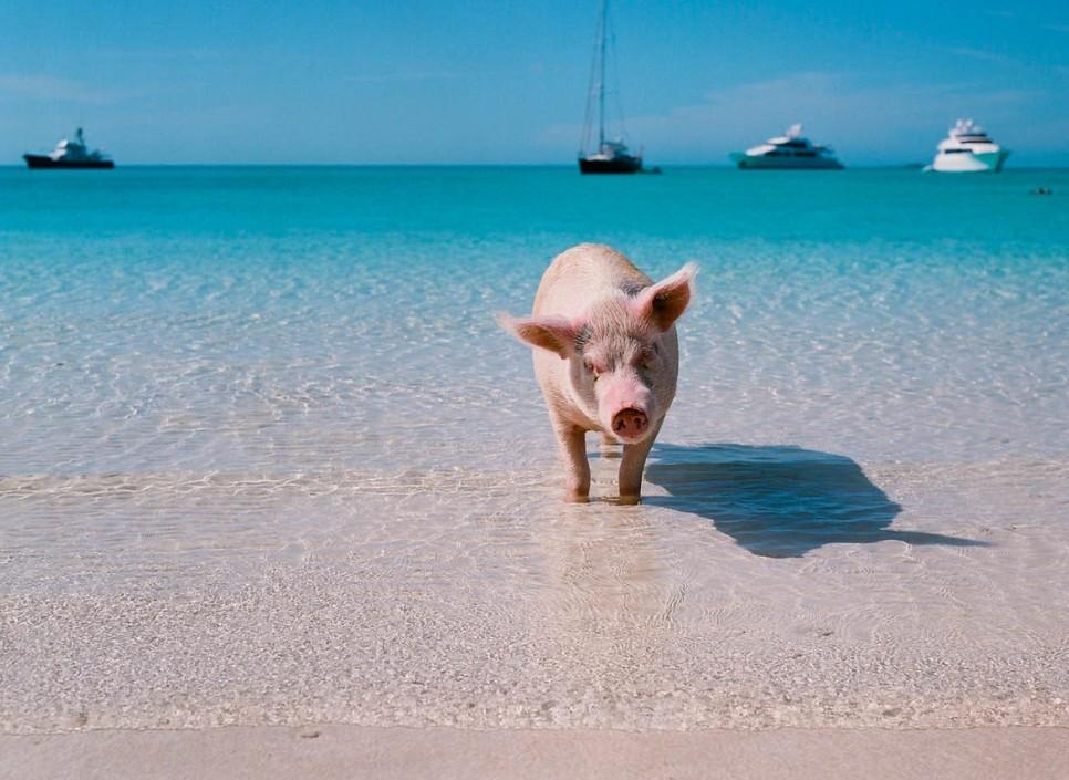 24吨英国猪肉首次海陆联运直抵河南,将冲击猪价?