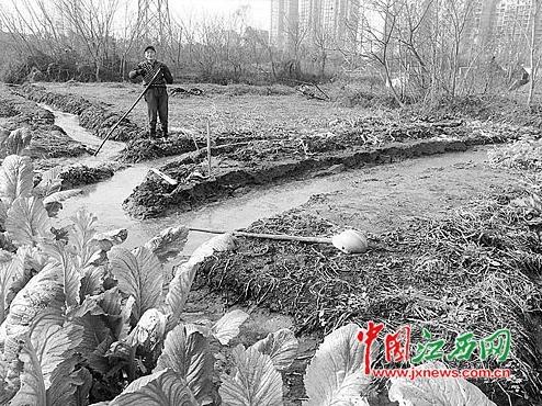 养猪场常年粪水直排青山湖区环保局:若整改不到位将处罚