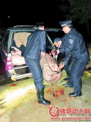 广州荔湾私宰猪肉窝点被取缔