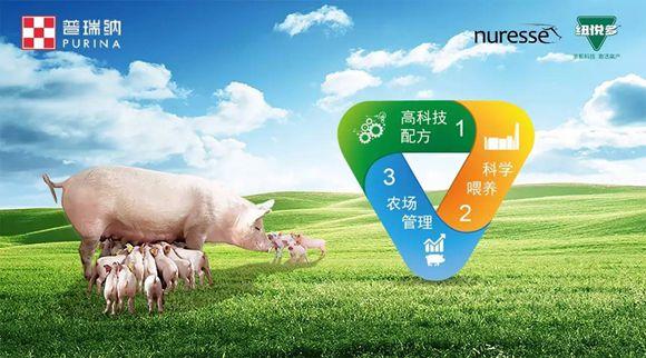 新品上市| 普瑞纳® 品牌隆重推出纽悦多——全新母猪整体解决方案