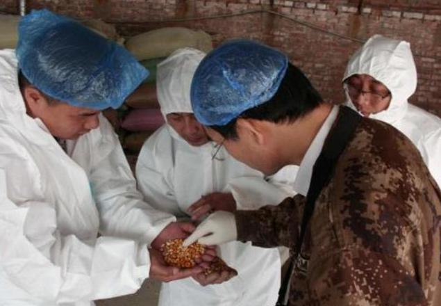 致养猪人:赶紧排查,一定要确保饲料不被非洲猪瘟病毒污染