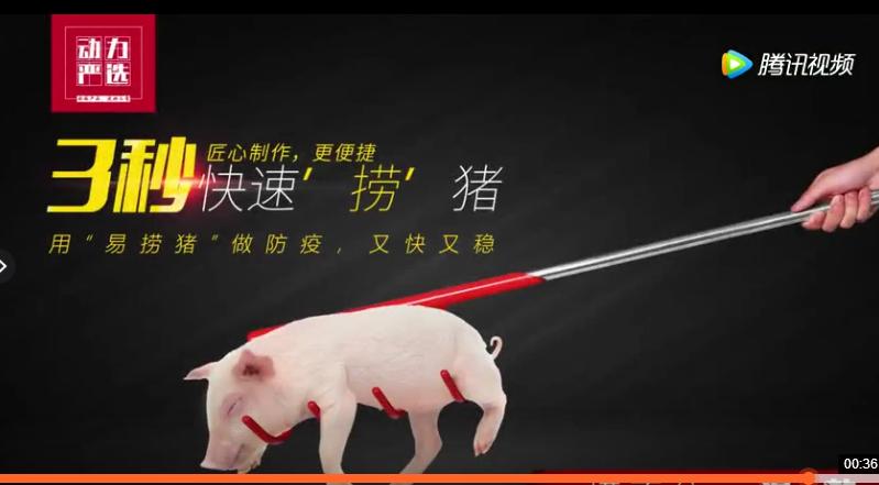 捞猪神器三秒快速抓住小猪,再也不用担心小猪应激大满栏乱跑了