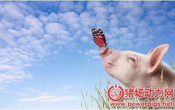 朱增勇:春节后猪肉行情仍将低迷,清明前后,猪价回暖