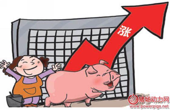 五个月:猪价继续上涨,拐点来了?