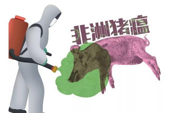 """海南万宁:疫点投放""""哨兵猪""""15天后检测达标可解封"""