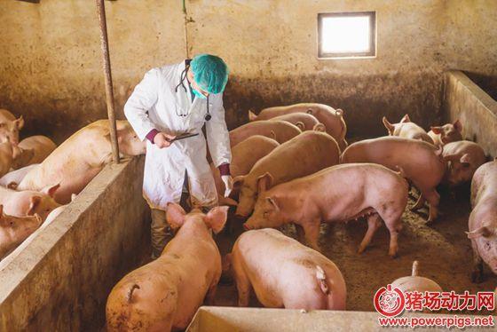 非洲猪瘟您认为是危机还是机会?生猪存栏急剧下降,而消费需求不变,在非洲猪瘟下如何生存下来?