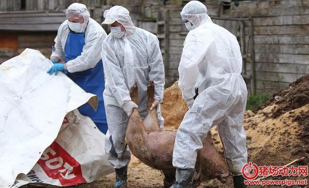 朝鲜非洲猪瘟