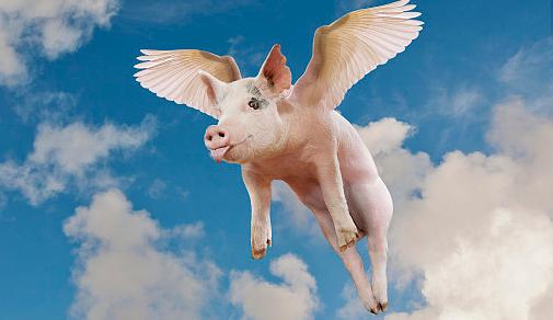 各国抢占中国猪肉市场,猪肉进口大涨!