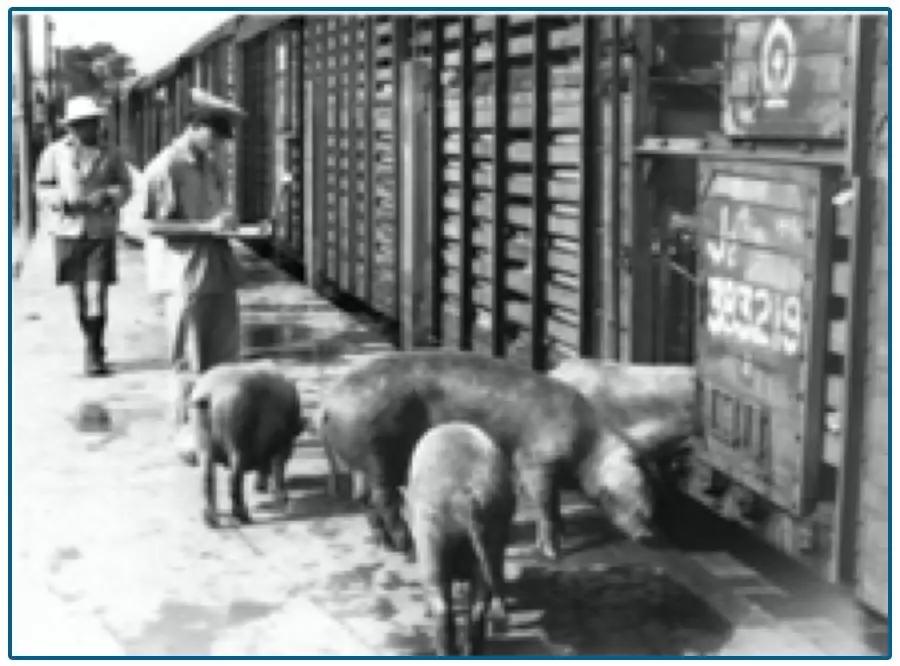 100港元的猪肉,70年的供港史…
