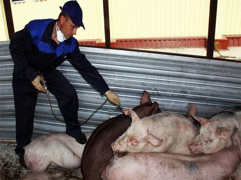 中国将加强猪肉质量安全监管
