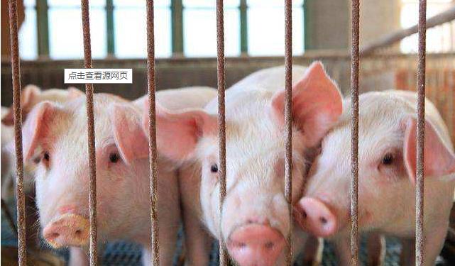 各地相继发布措施促进生猪生产 猪肉批发平均价继续下降