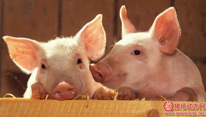 哈尔滨提振生猪产能,确保如期完成我市360万头生猪养殖任务