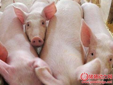 供应充足!黑龙江省生猪存栏稳定在1200万头